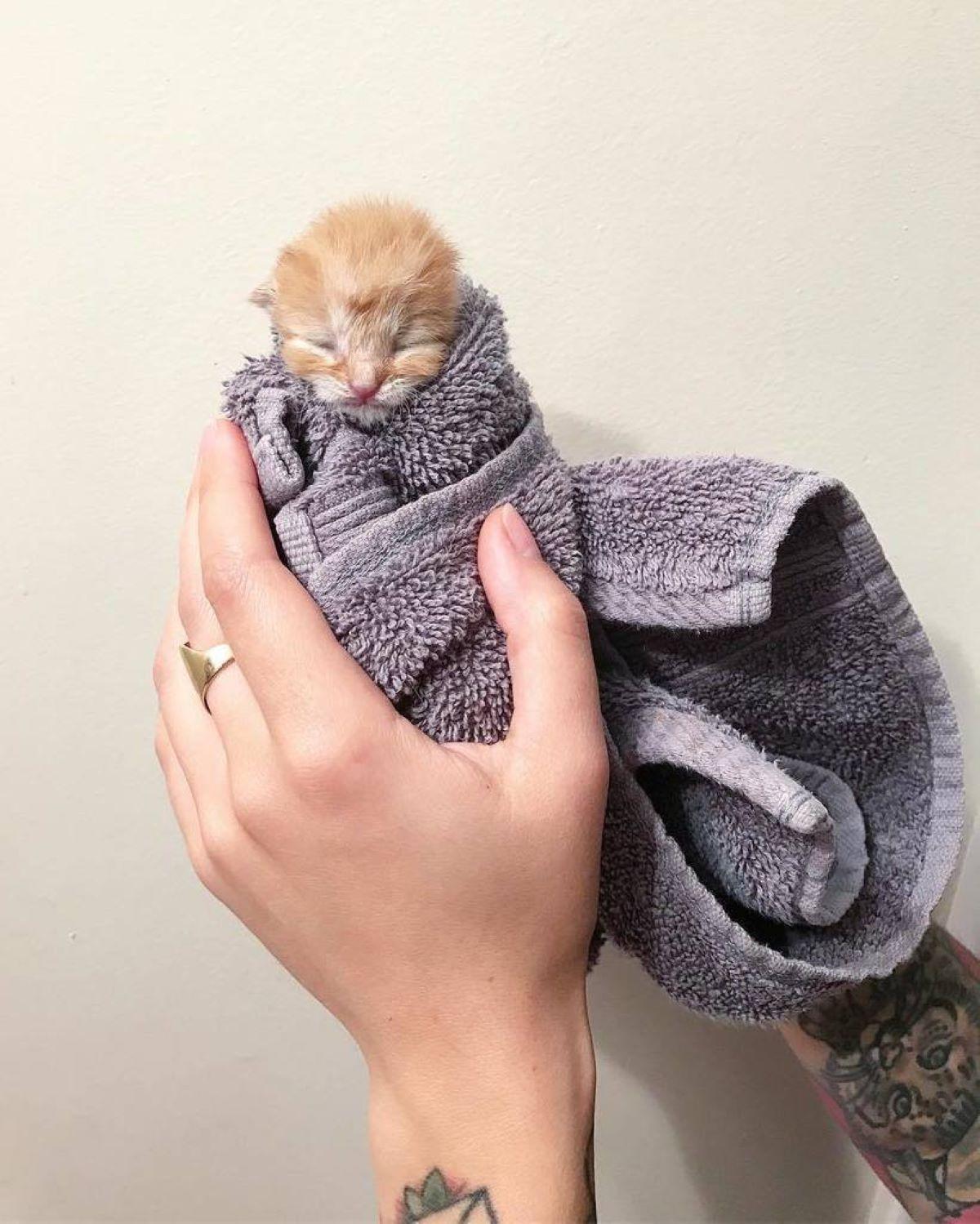 gatto-con-coperta