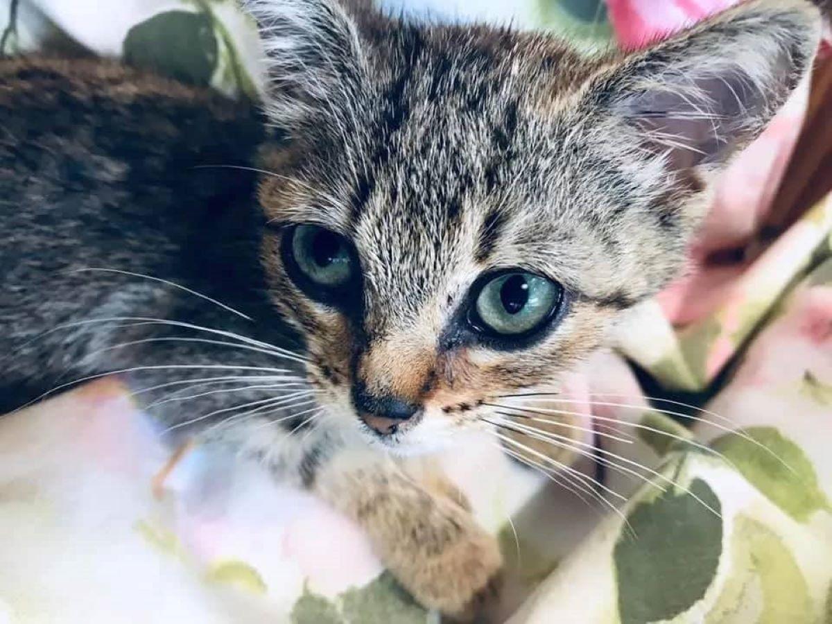 gattino-che-guarda