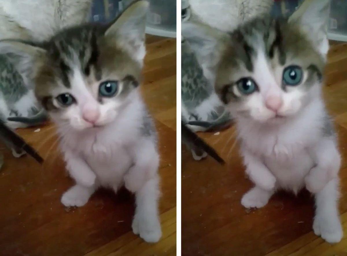 gatti-in-forma-eretta