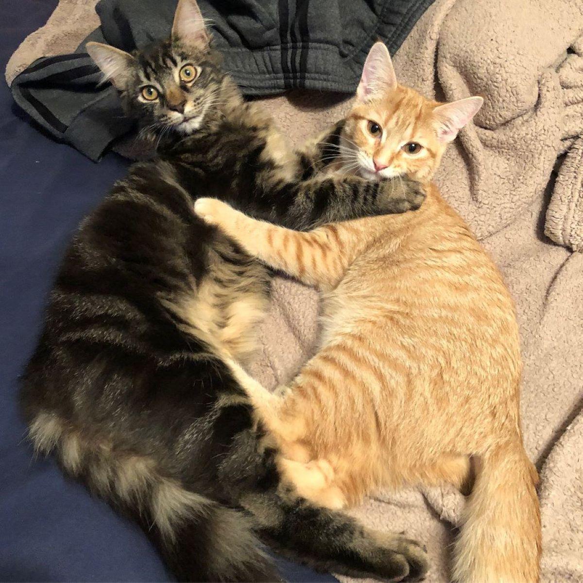 gatti-abbracciati