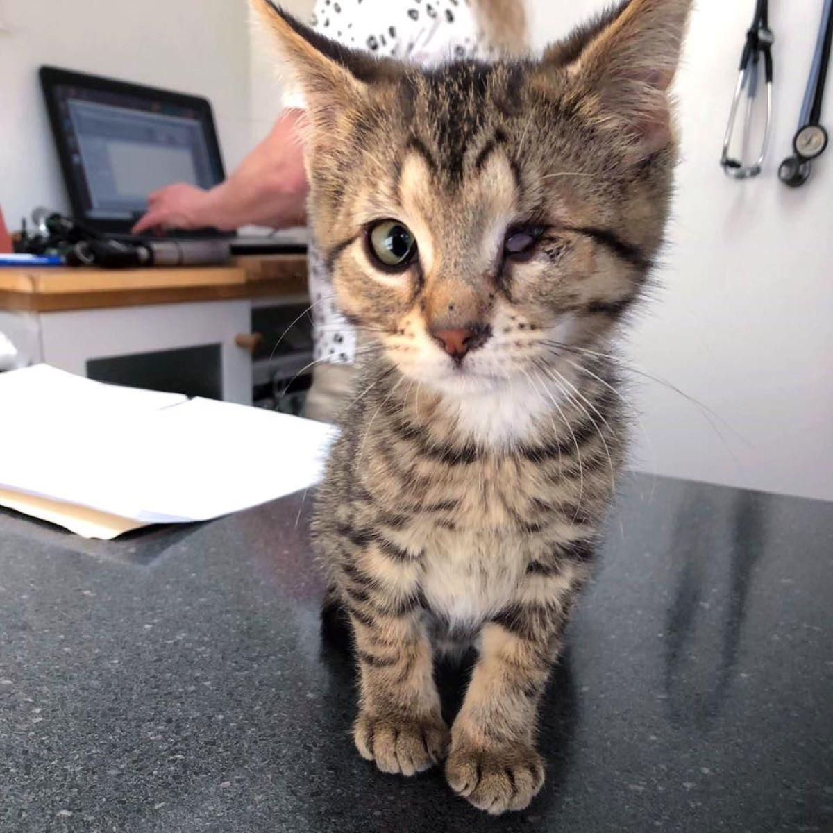 gattino-senza-occhio-su-tavolino
