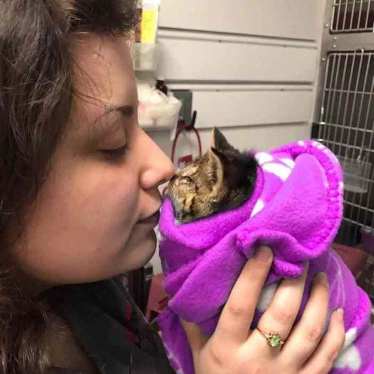 gattino-con-coperta-e-donna