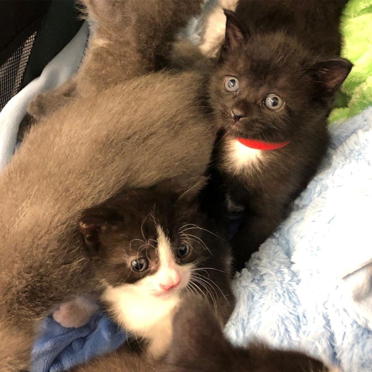 gattini-su-coperte