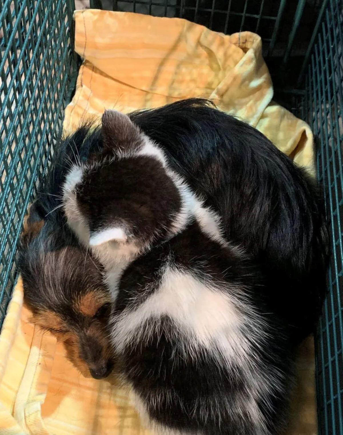 gattino-e-cagnolino-avvinghiati