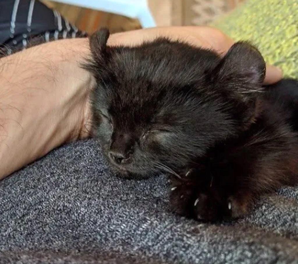 gattino-nero-che-dorme
