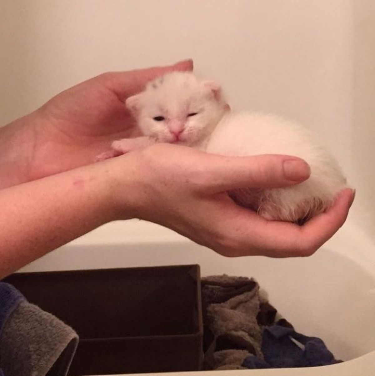 gattino-tenuto-sul-palmo-della-mano