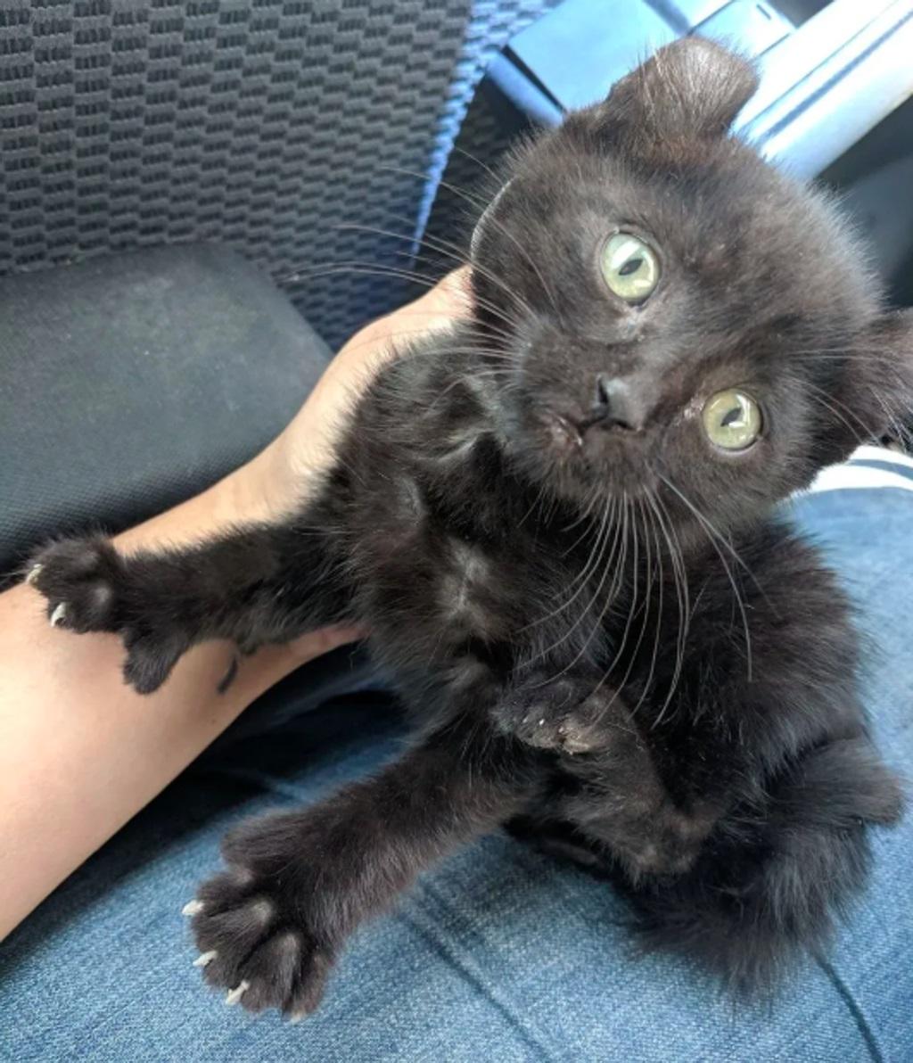gatto-nero-su-ginocchia-umano