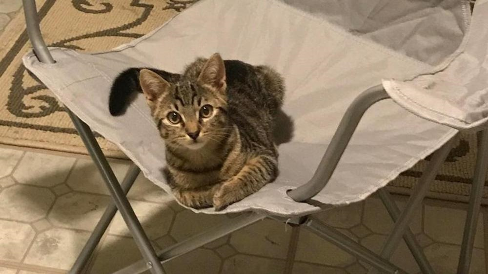 gattino-su-sedia