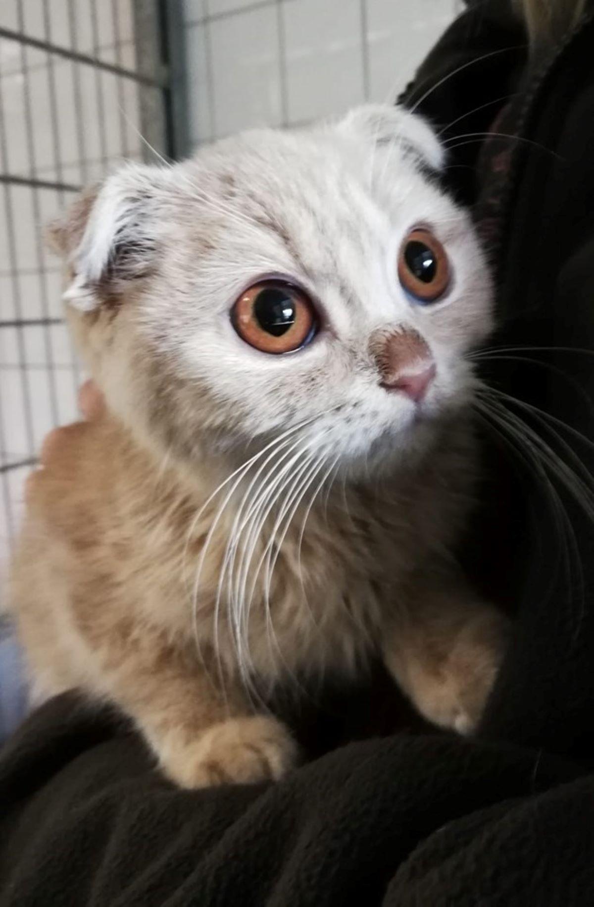 gatto-con-sguardo-sveglio