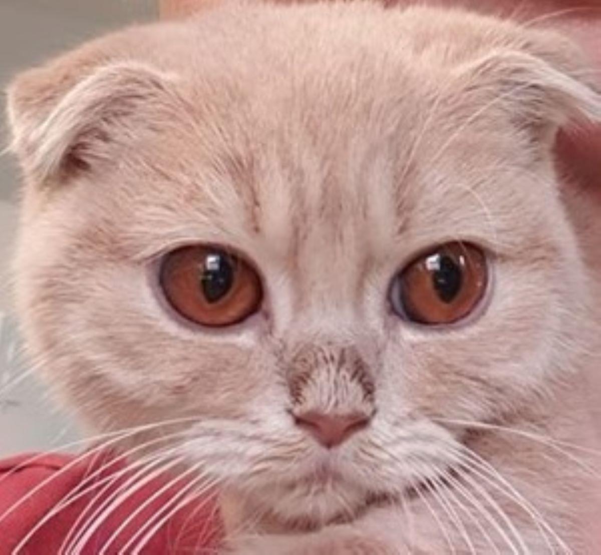 gatto-con-occhi-molto-grandi