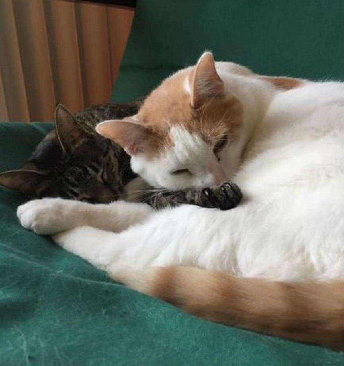 due-gatti-che-dormono