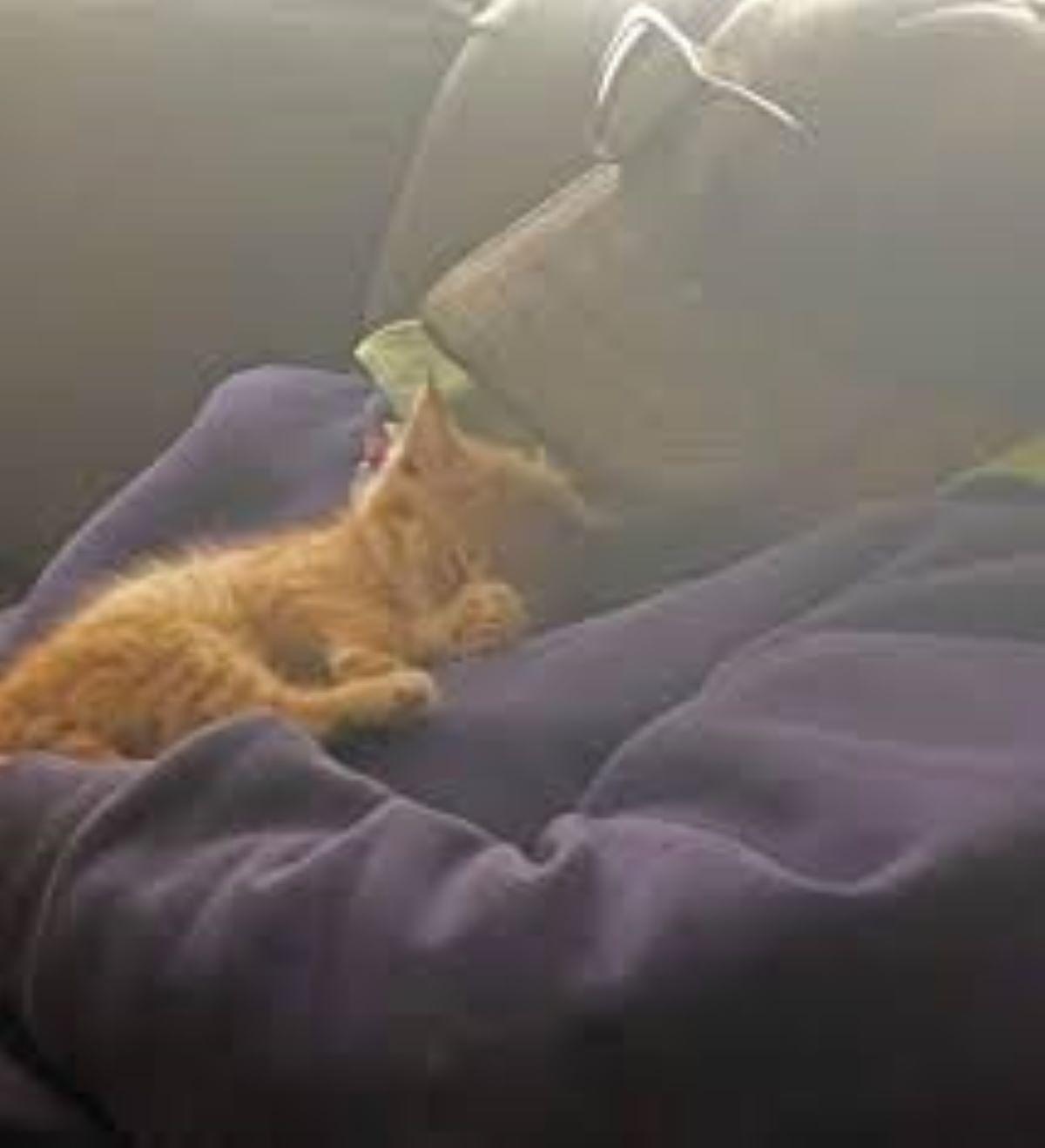 gatto-che-dorme-su-pancia-uomo