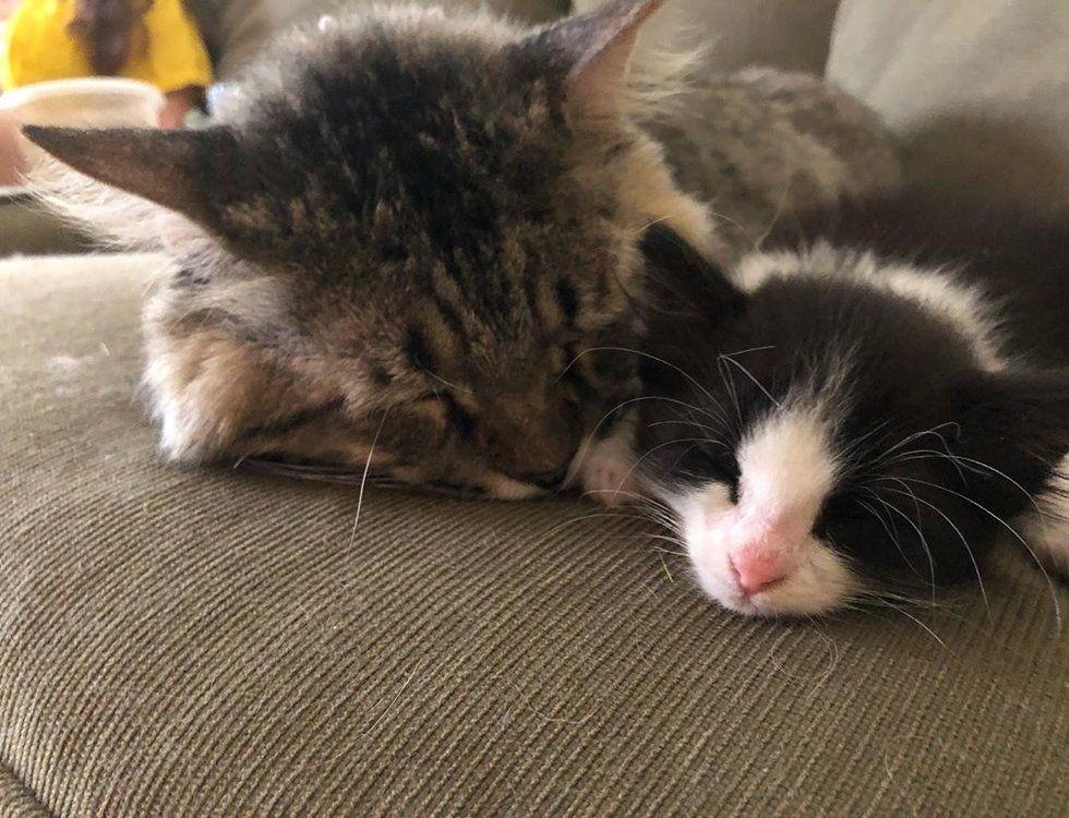 gatto-che-dorme-vicino-a-gattino