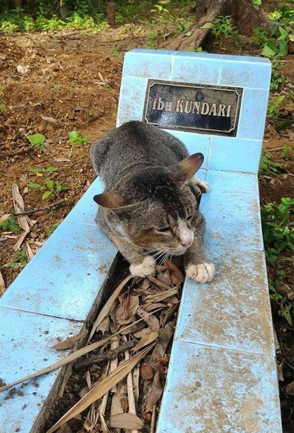 gatto-su-pietre-azzurre