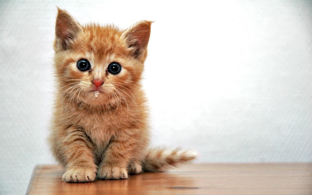 gattino che sbava leggermente
