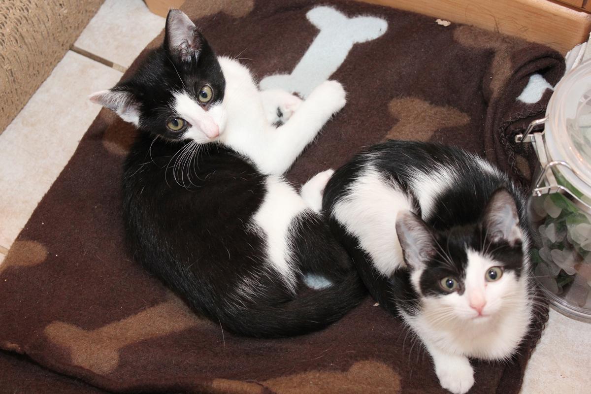 due gatti su una coperta