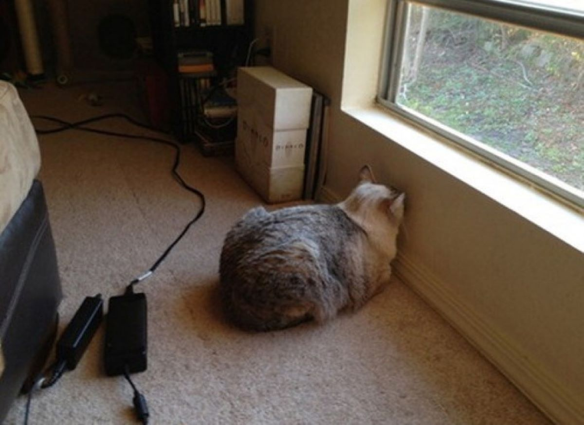 gatto-contro-parete