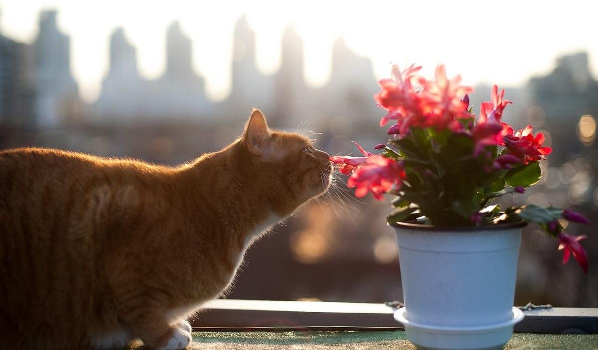 gatto annusa pianta