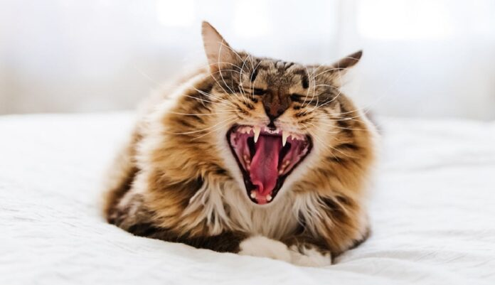 gatto su letto che starnutisce