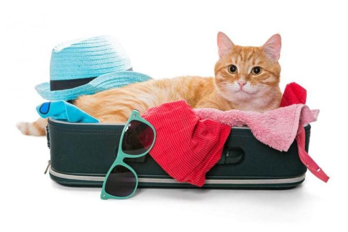 gatto-in-valigia