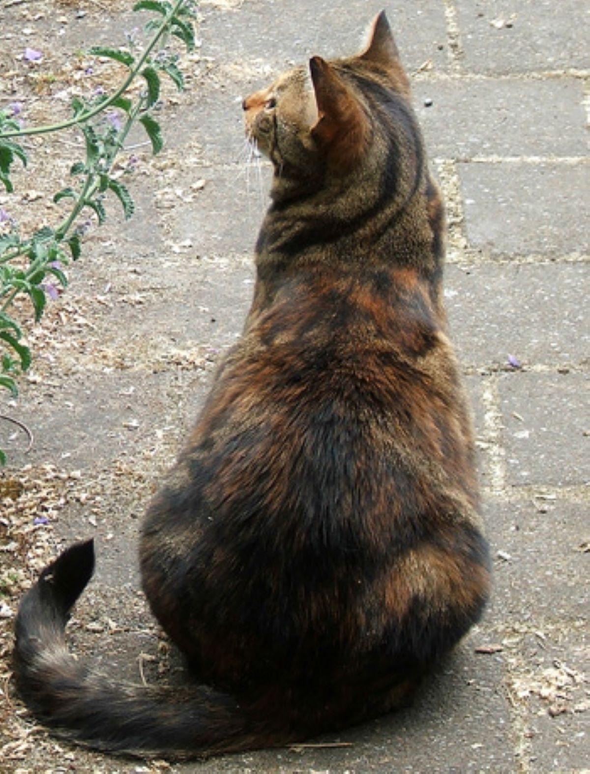 gatto-adulto-che-da-le-spalle