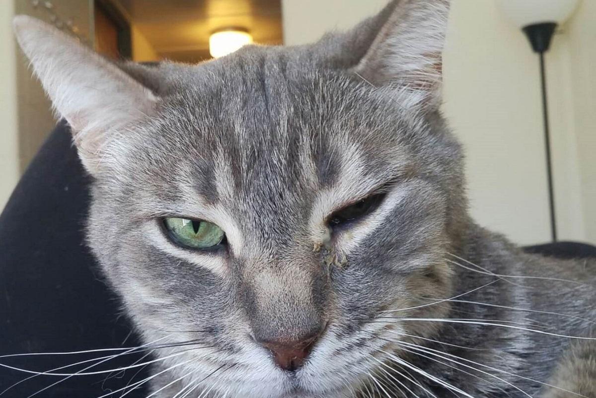 gatto con occhio semichiuso