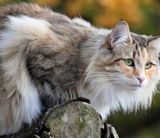 gatto wegie su ramo d'albero