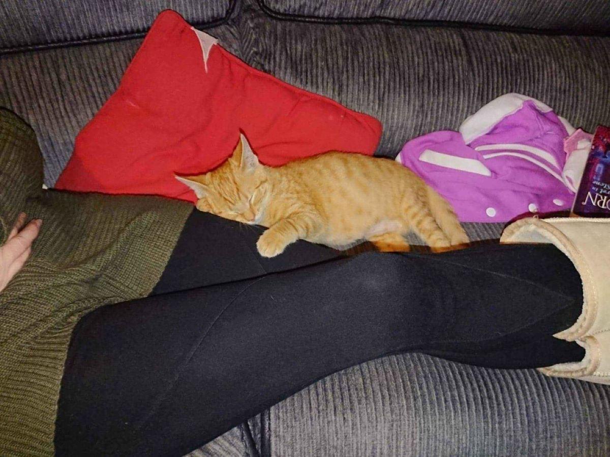 gatto-rannicchiato-su-gambe-umane