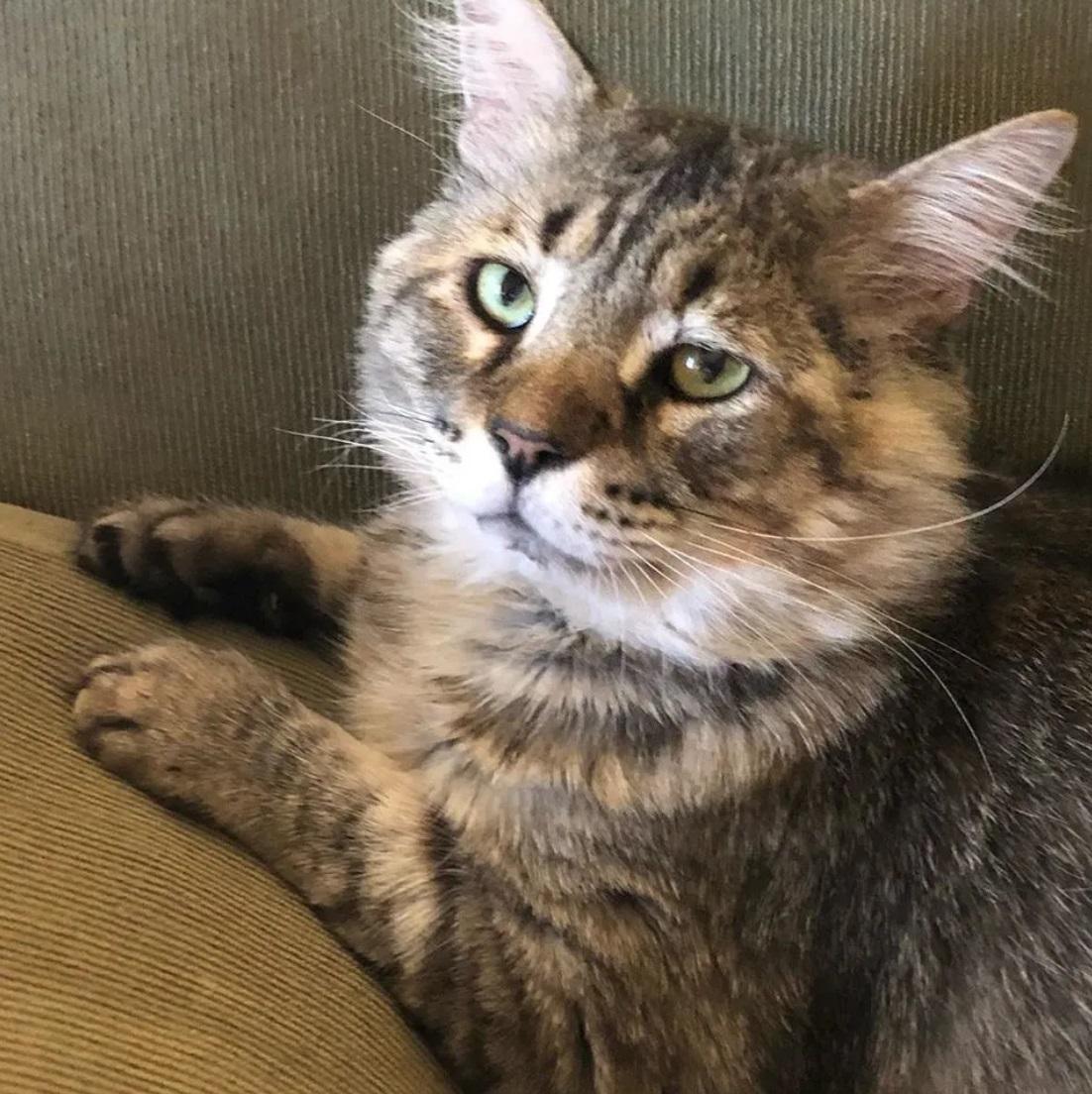gatto-paffutello