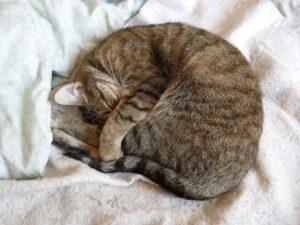 Perché i gatti dormono con noi