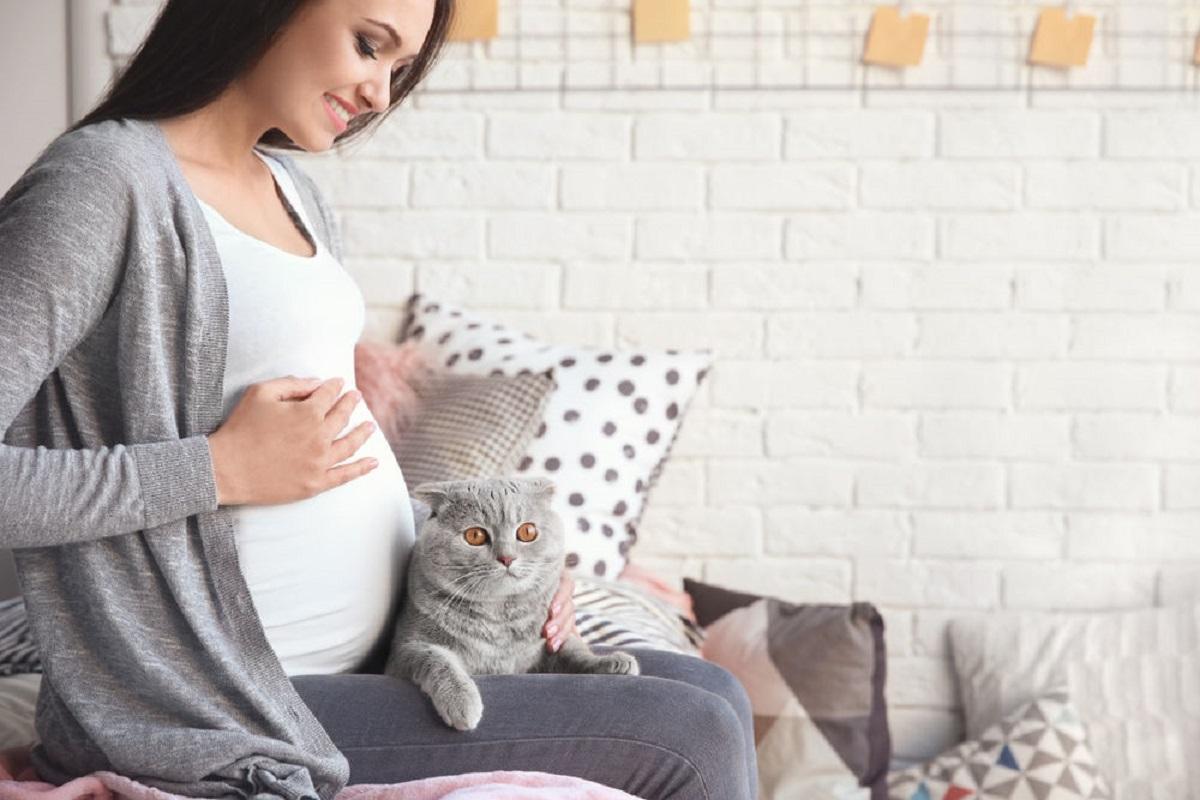 gatto grigio sulle gambe di donna incinta