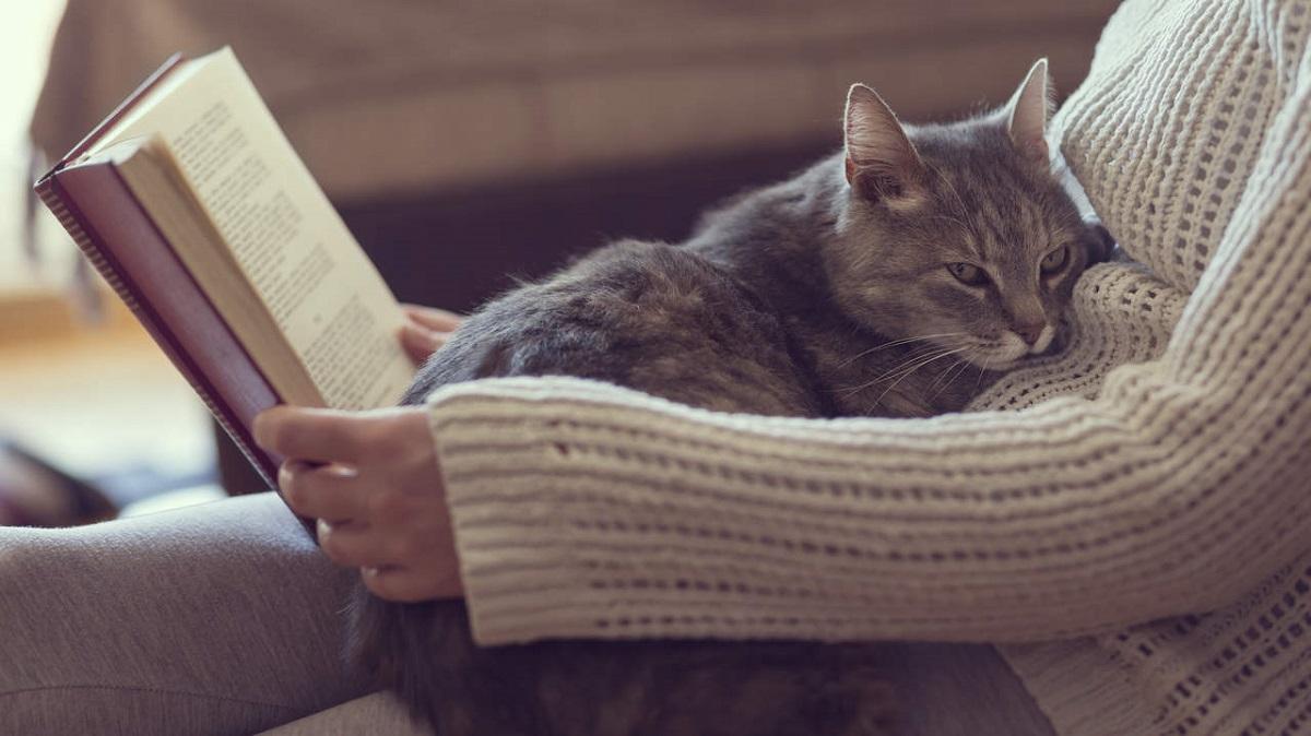 gatto su gambe di donna che legge