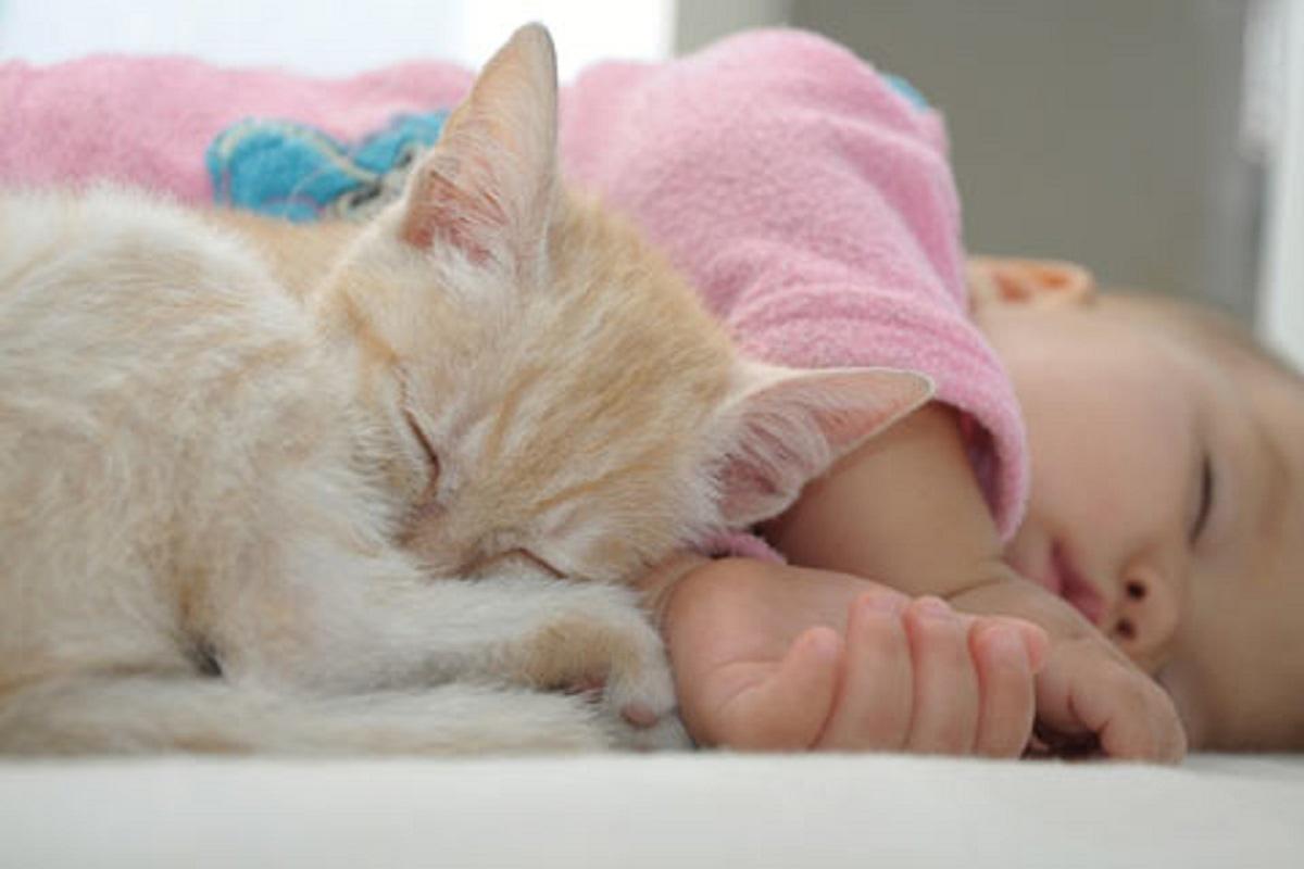 gatto e neonato dormono insieme