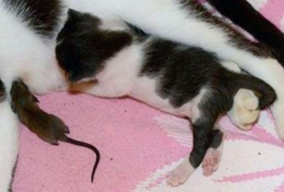 gattino-e-topolino