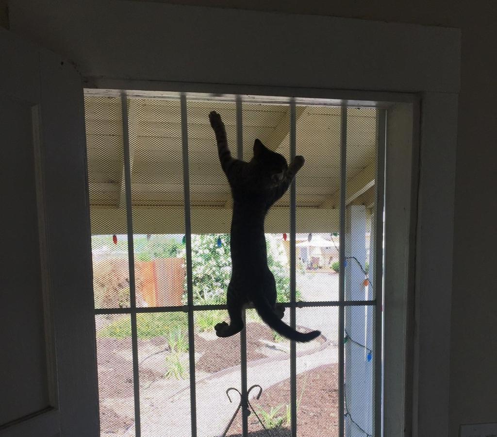 gatto-arrampicato-su-finestra