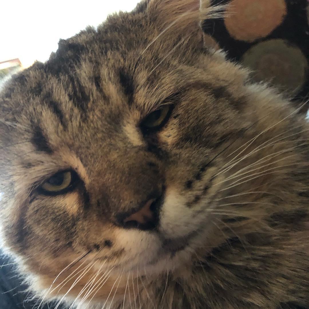 gatto-con-occhi-sornioni