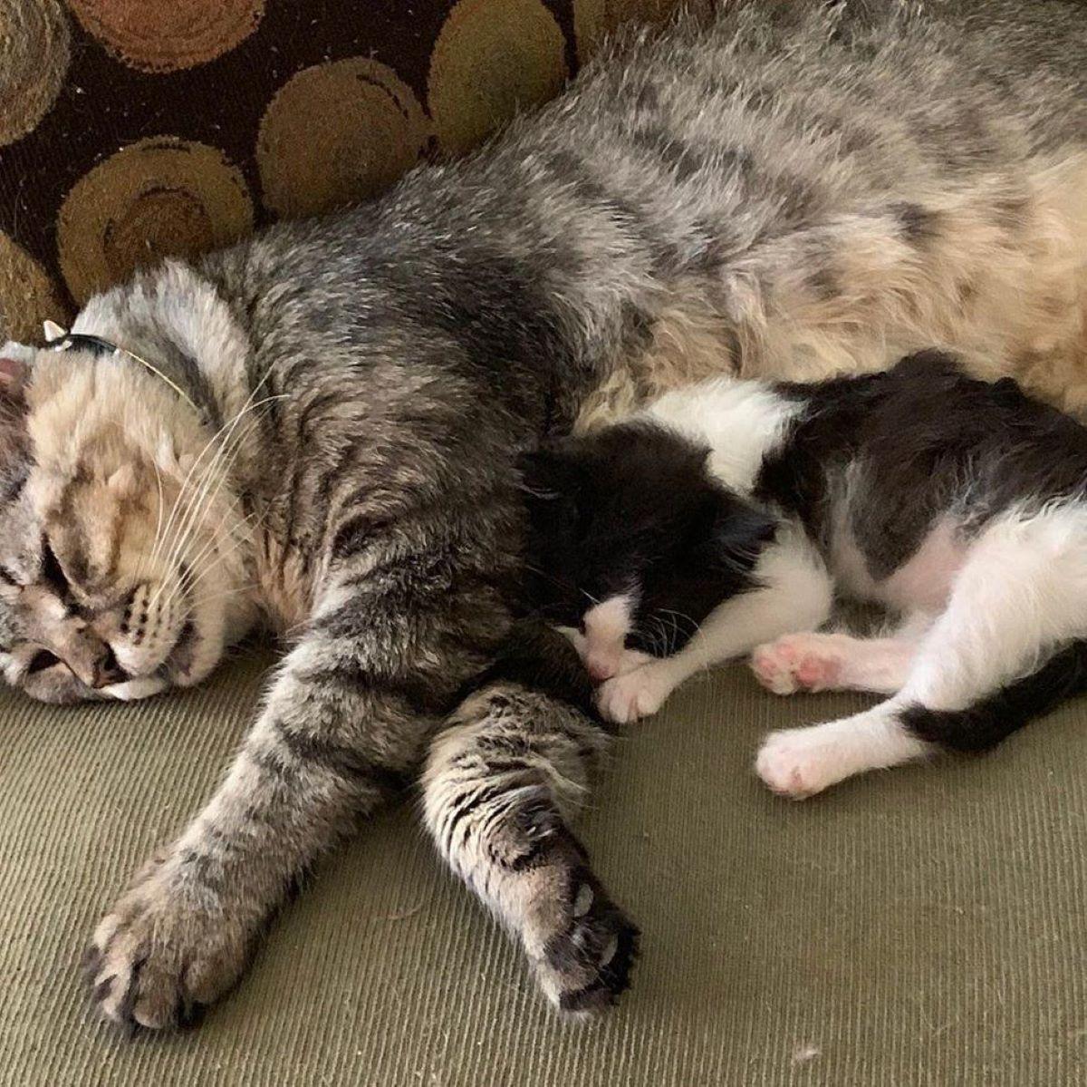 gatto-e-gattino-che-dormono