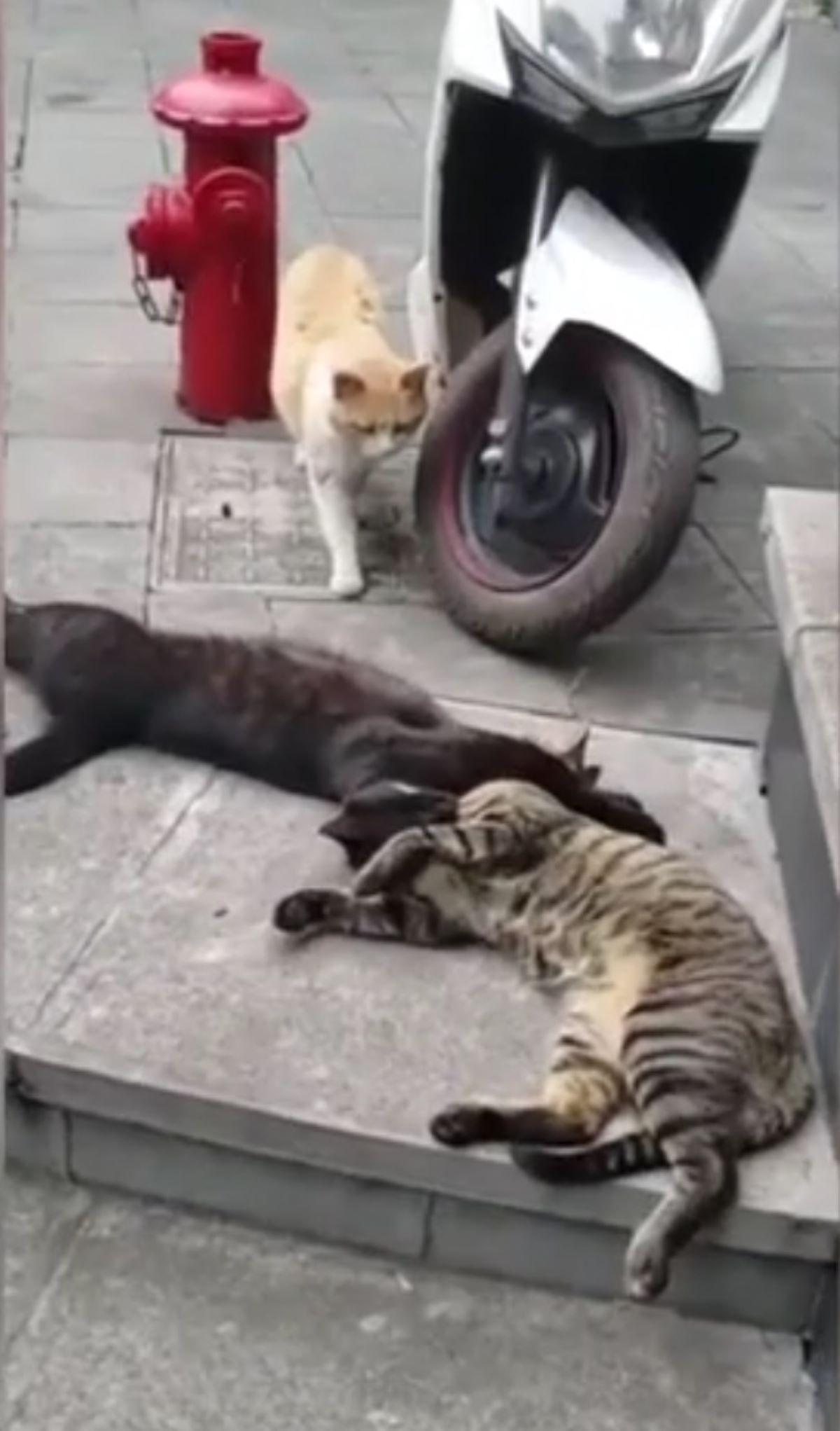 tre-gatti-su-marciapiede