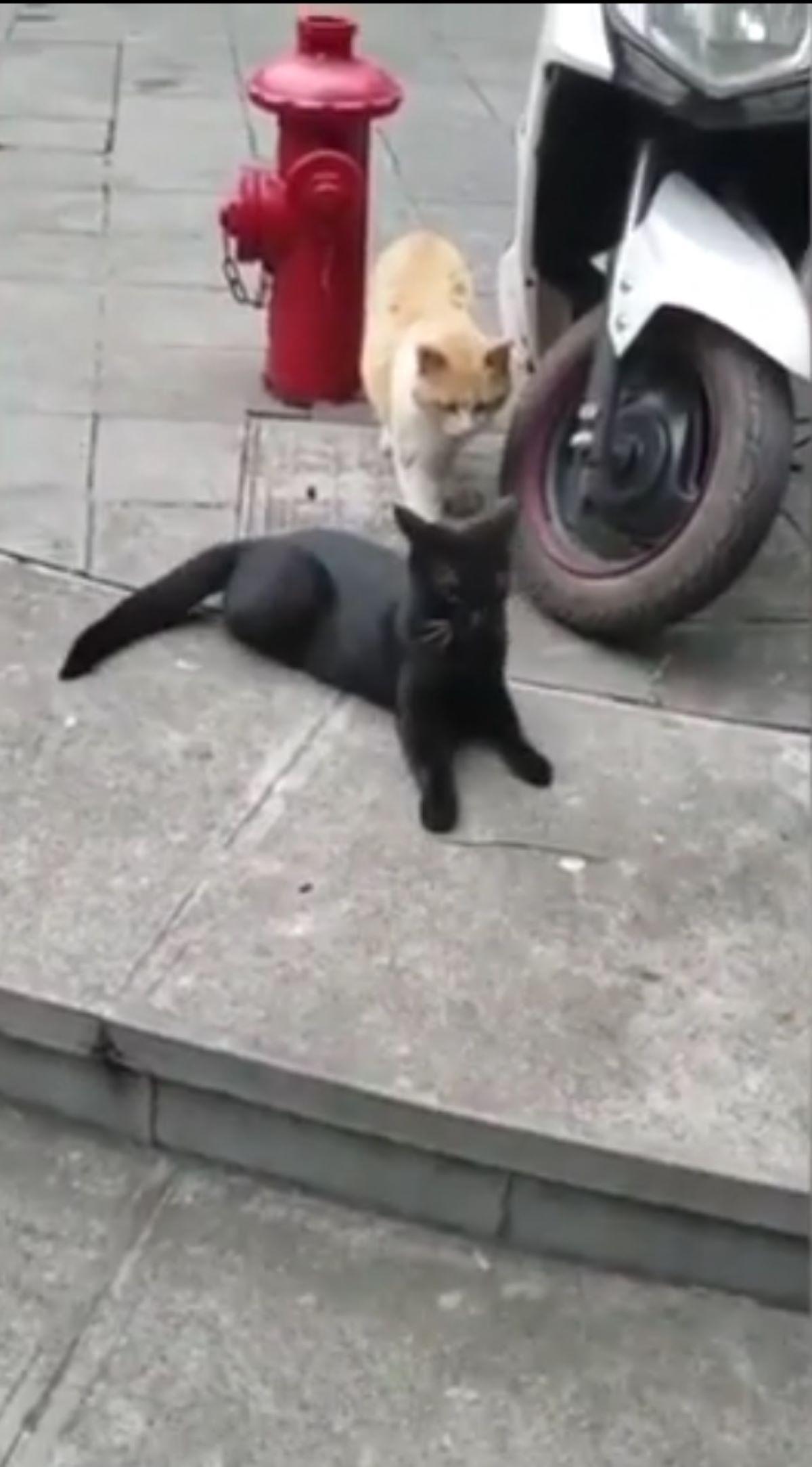 gatto-nero-e-gatto-bianco-e-arancione
