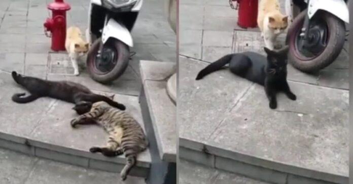 gatti-che-si-coccolano