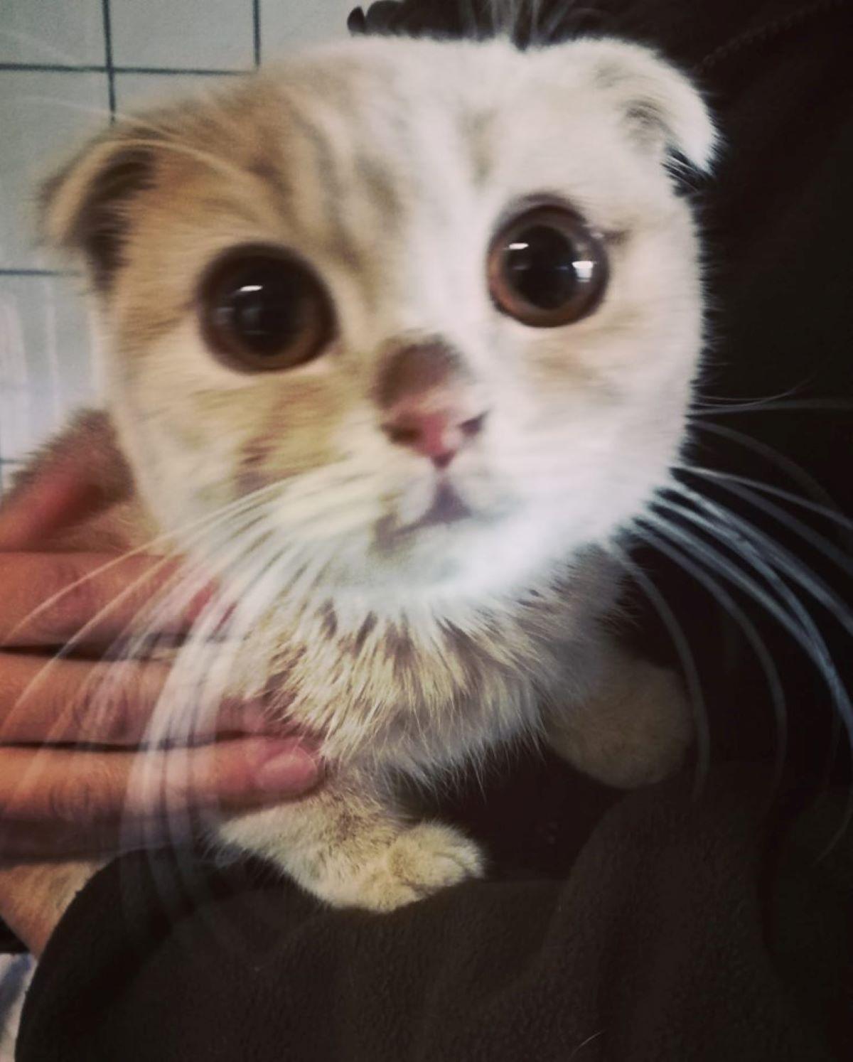 gatto-sulle-spalle