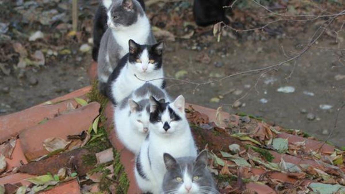 tanti-gatti-in-fila