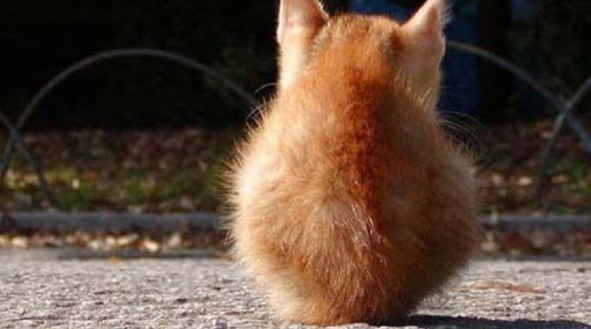 gattino-arancione-di-schiena