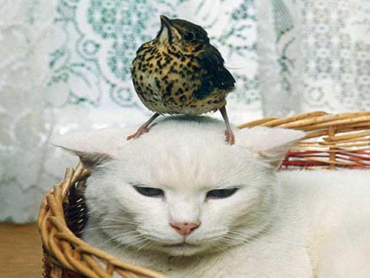 gatto-con-uccello-in-testa