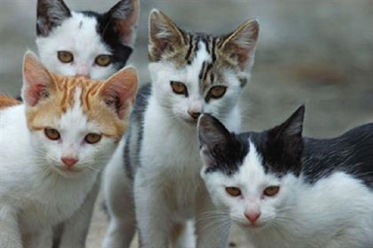 quattro-gattini