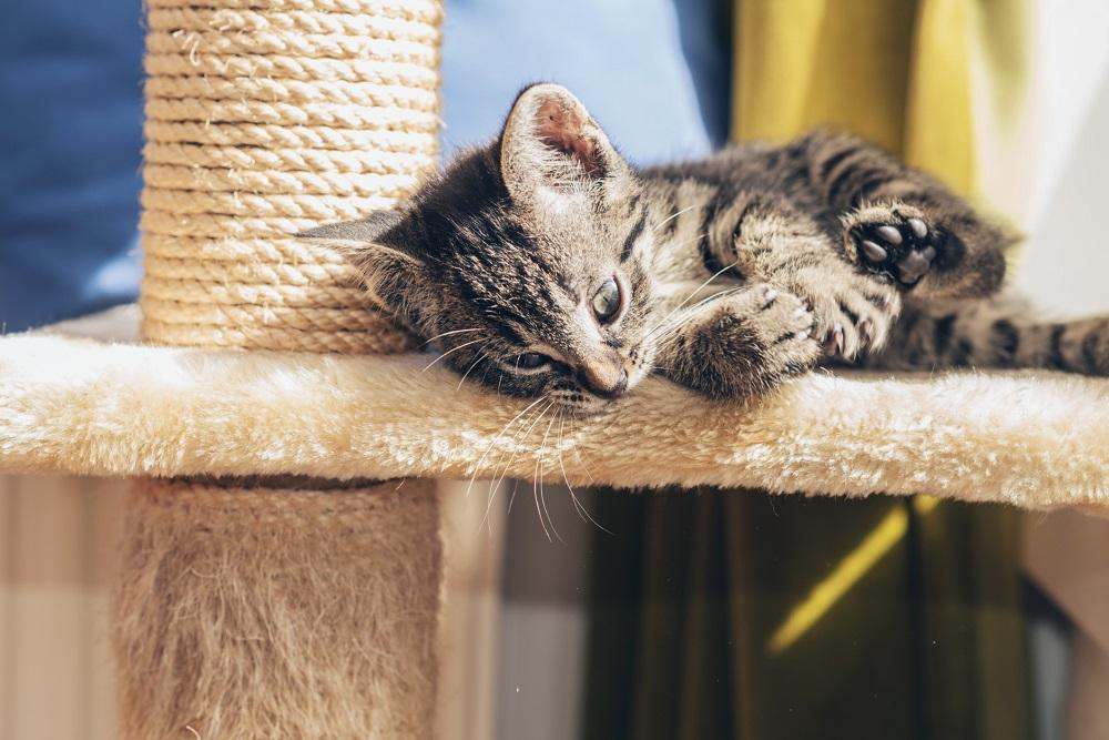 Perché i gatti graffiano