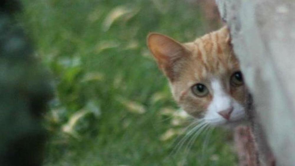 gatto-che-fa-capolinea-da-un-muro