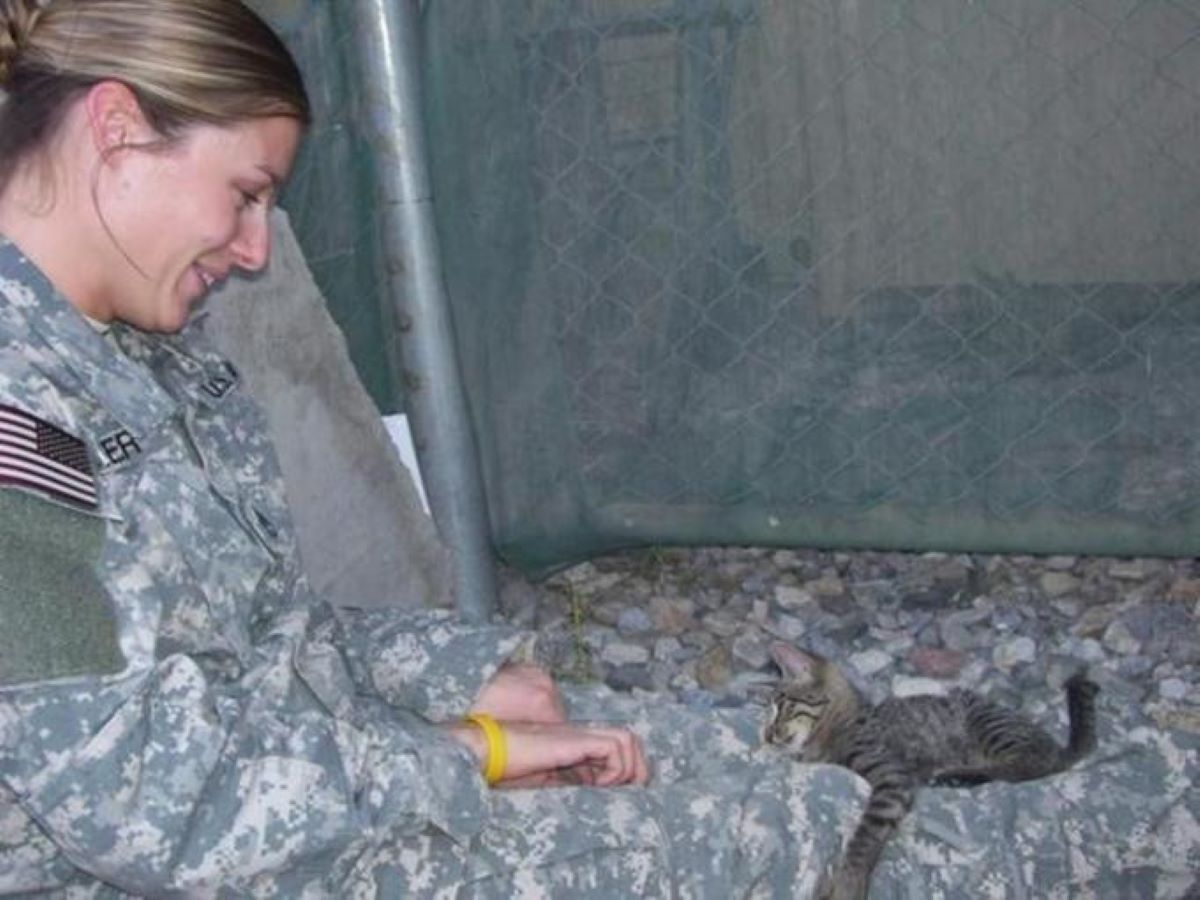 gattino-che-gioca-con-soldatessa