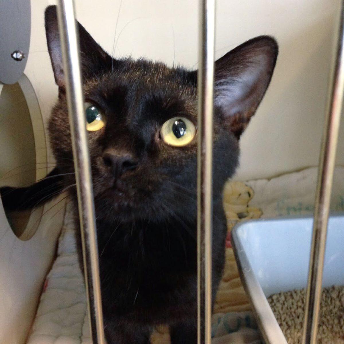 gatto-nero-dietro-a-sbarre