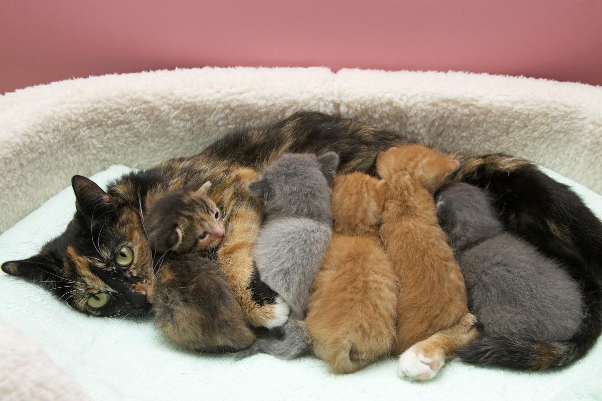 mamma gatta con cinque gattini